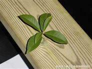 柳安木等园林景观防腐木材